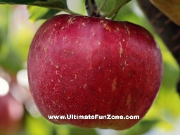 Weight Loss Fruit Apple